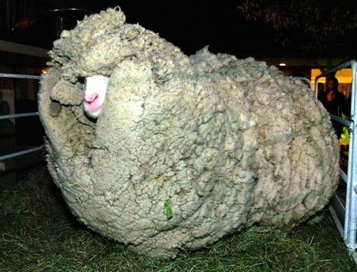 shrek-the-sheep-36.jpg